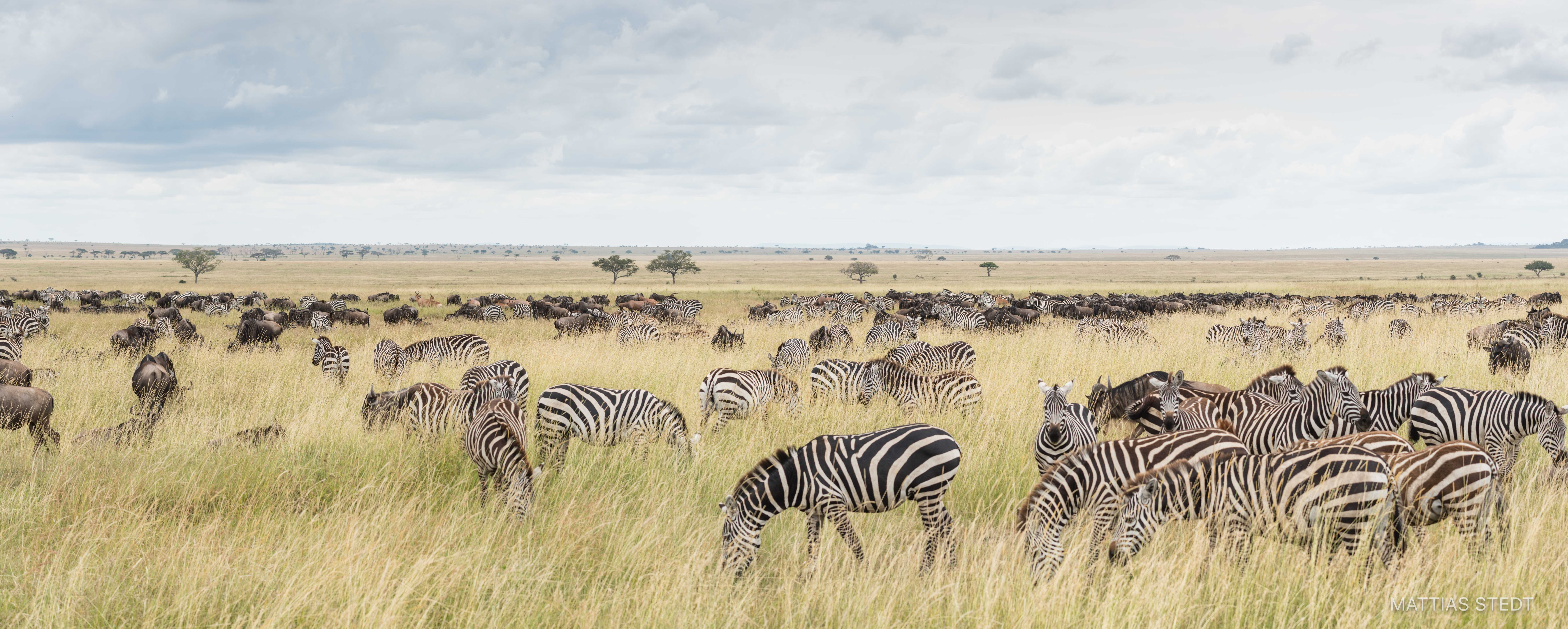 Great migration, Tanzania