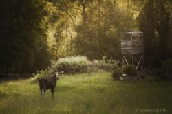 © Mattias Stedt