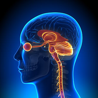 Brainspotting - eye gaze to limbic system.