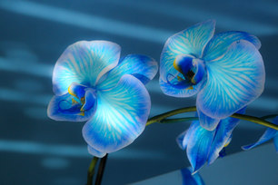 Glowing Orchids