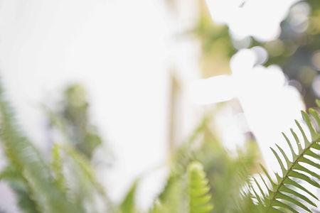 MX19_LIFESTYLE_HOSP HAWAII fern_texture