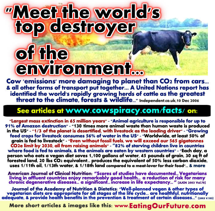 livestock-cattle-cows-animal-agriculture