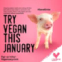 vegan-pig.jpg