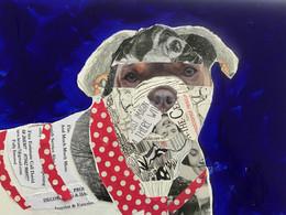 Brilliant Mad Dog