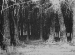 Lesson idea - Woods in Charcoal