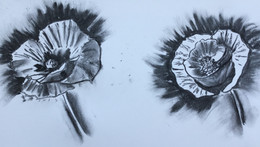 Poppies in charcoal.