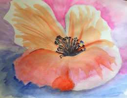 beautiful loosely painted poppy...