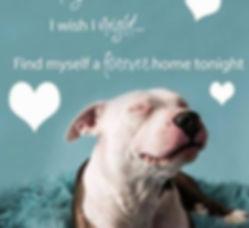 Foster-adopt.jpg