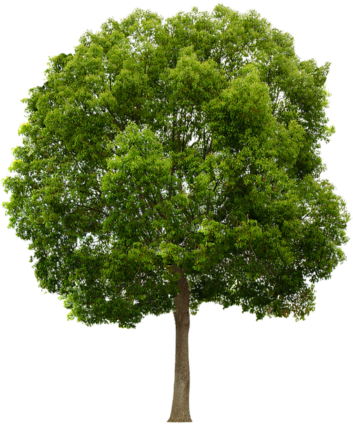 8-2-tree-png.png