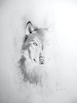 • Wolf •