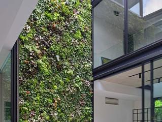 Hadirkan Vertikal Garden di dalam Rumah Minimalis