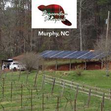 Beaverdam Vineyard,  Murphy, NC