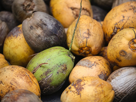 Shedding Light On The Coconut Oil Controversy