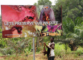 How the global wildlife trade threatens human health as well as endangered species
