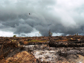 Resurrection: A poem for West Africa's rain forests