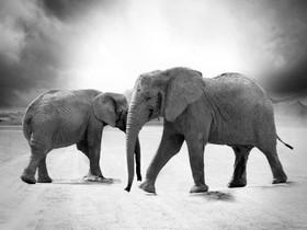 "Quraysh Ali Lansana Reads ""Elephants in the Room"""