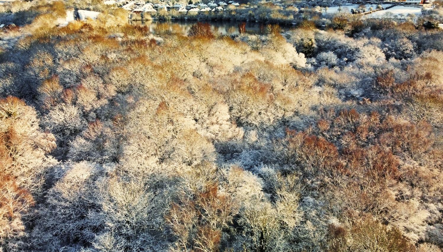 Saltwells Winter