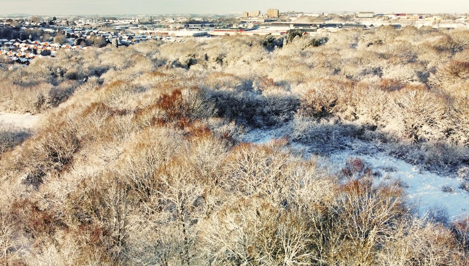 Daltwells Winter