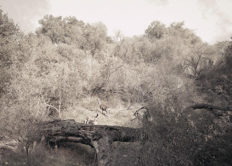 Deers-by-Markus-Henttonen