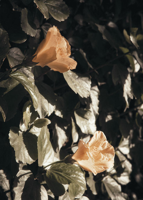 YellHeow-Flowers-by-Markus-Henttonen