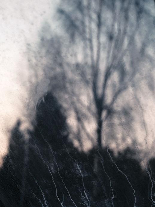 Trees-by-Markus-Henttonen