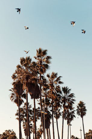 Venice Beach, Nokia by Markus Henttonen
