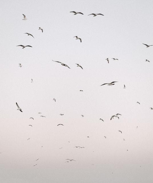 Birds-by-Markus-Henttonen