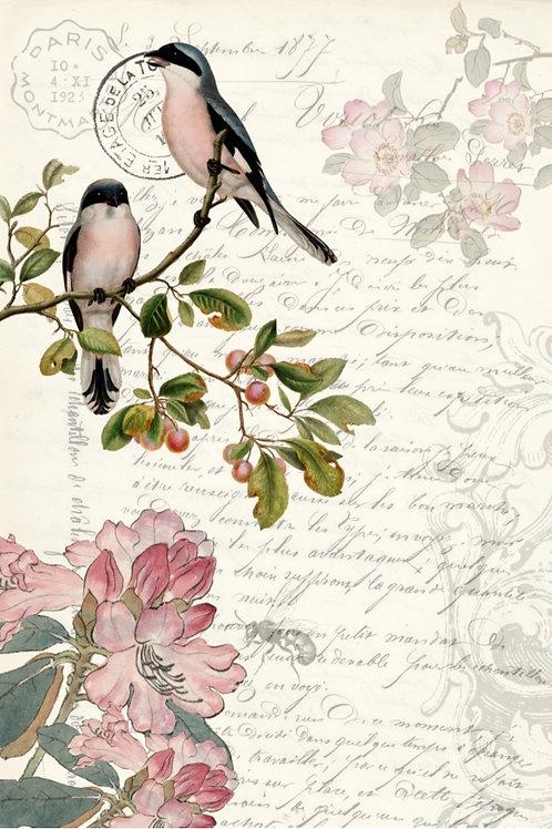 Spring Bird Ephemera