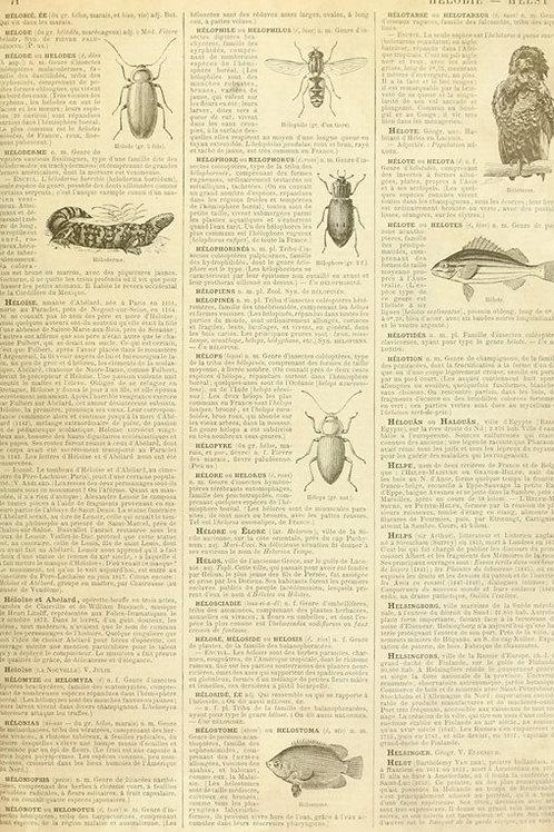 Entomology Dictionary Page