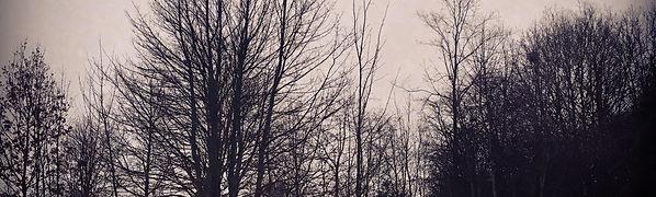 Moody trees