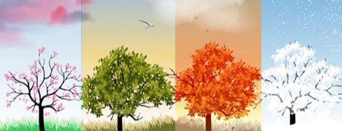tree_with_four_seasons_vector_546378_edi