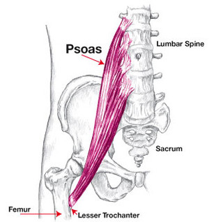 What is your psoas and why, as runners, should you care?