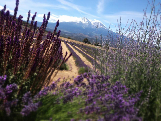 Mount Shasta Travel Diaries