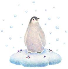 雪降る季節の子ペンギン