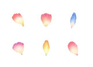 花びら No.1