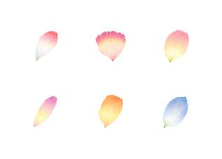 花びら No.2