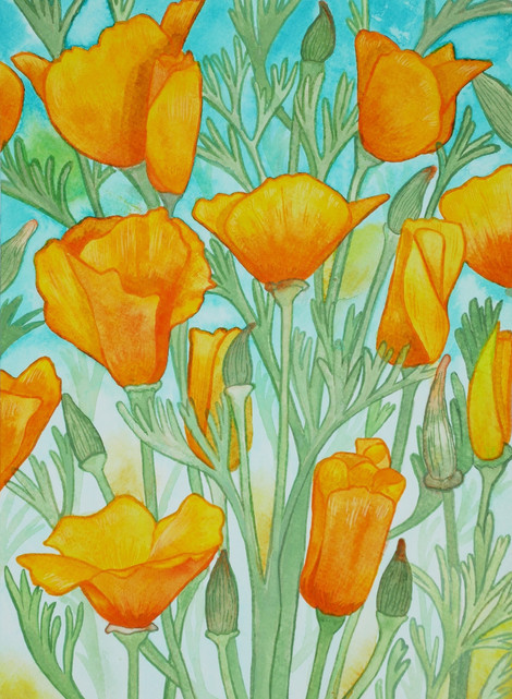 California Poppies in Ink