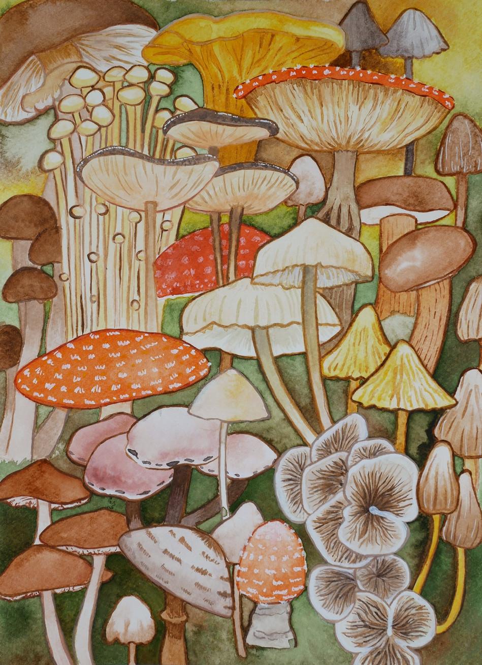 Mushroom study in ink