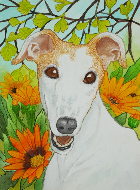 Sunny the Greyhound
