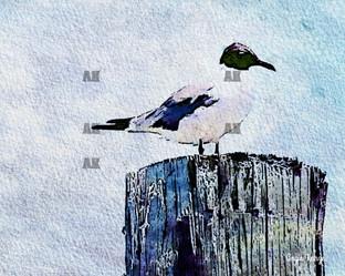 bird on pier paint