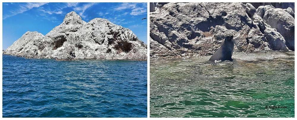 California sea lions on San Jorge Island, Bird Island in the Sea of Cortez, Gulf of California in Mexico