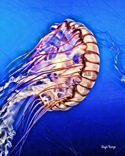 jellyfish 6