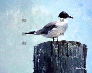 bird (1) on a pier