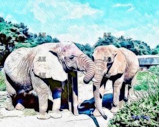 """elephants"" orton style"