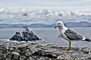 Seagull graphic