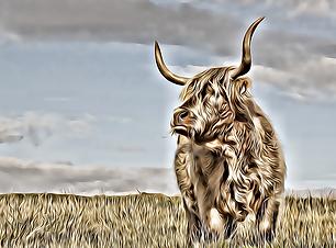 hair coo scottish cow artwork in my scotland art gallery meu