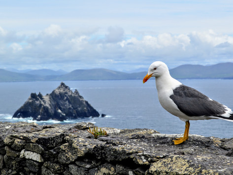 Skellig Michael Island, Ireland: remnants of an ancient monk colony, and a stairway to heaven!