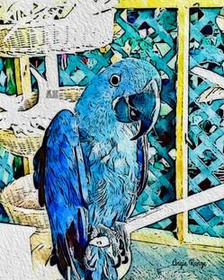"""""""blue parrot"""" paint"""