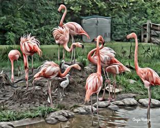 """flamingos"""