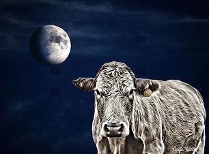 cow with moon artwork in my wee bit of fun art gallery shop menu